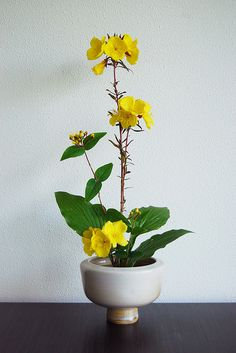 Ikebana with Sundrops by Otomodachi, via Flickr