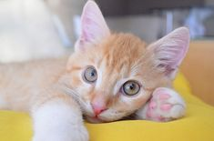 15 cat behavior secrets : The cats , most superior animal on internet world today. Cats sometime act weird with the best possible ways. Baby Kittens For Sale, Kittens Near Me, Cute Kittens, Cats And Kittens, Pet Shop Online, Gatos Cool, Cat Biting, Cat Exercise, Finding Nemo