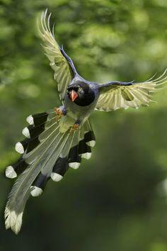 Beautiful Birds in Flight Kinds Of Birds, All Birds, Love Birds, Pretty Birds, Beautiful Birds, Animals Beautiful, Exotic Birds, Colorful Birds, Green Birds