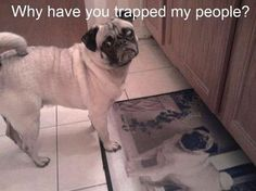 why have you trapped my people!