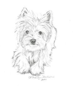 Ähnliche Artikel wie Casey print of pencil drawing Westie auf Etsy Casey is an 8 x 10 print of a pencil drawing that I drew of my West Highland White Terrier when she was still with u West Highland Terrier, Dog Paintings, Watercolor Paintings, Animal Drawings, Art Drawings, Pencil Drawing Tutorials, Simple Pencil Drawings, Dog Drawing Tutorial, Drawing Ideas