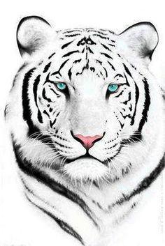 "Animals Cross-stitch pattern ""White Tiger"" Pattern Name: White Tigger Fabric: Aida Rue X Stitches Size(s): 14 Count, X cm 16 Count, Beautiful Cats, Animals Beautiful, Art Tigre, Animals And Pets, Cute Animals, Wild Animals, Baby Animals, Dragon Fight, Gato Grande"
