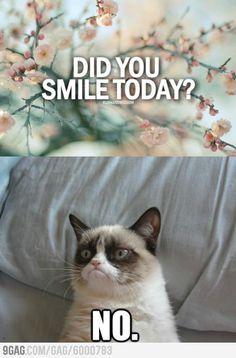 Lol,,,Love Grumpy Cat!