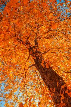 66e63c297a2 Autumn by Tore H. on 500px Unique Trees