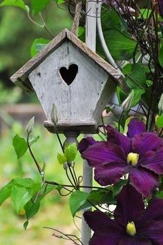 Clematis and weathered wood birdhouse