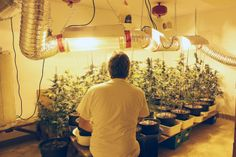 Regulation changes impact medical pot grower  Please share my friend William's Interview...  MANY of us feel this way....  ;)  http://www.stcatharinesstandard.ca/2014/01/23/new-regulations-for-growing-medical-marijuana-impact-local-grower  Thank U.  Love and a Squish,   Alison Myrden xx Retired Law Enforcement Officer Speaker for LEAP since 2004 Law Enforcement Against Prohibition http://www.leap.cc/