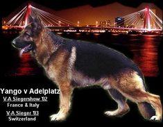 Vom ADELPLATZ Adele, German Shepherd Breeders, Family Dogs, Goal