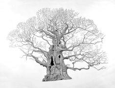 Majesty Art Corner, Tree Trunks, Graphite Drawings, Midsummer Nights Dream, New Forest, Kew Gardens, Botanical Art, Natural World, Moose Art