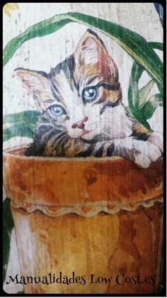 Detalle Teja de gatitos