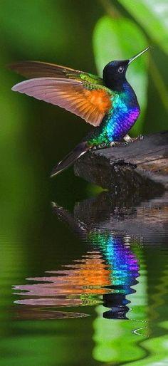 Coole vogel bij het water