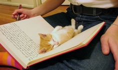 Forget your diary - rub my tummy.  http://herbgardener.tumblr.com/post/4248755751#