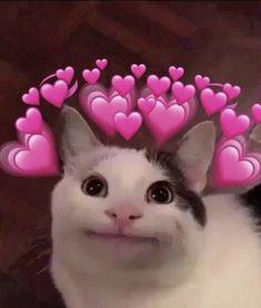 Os Heart Memes Dominarão o Mundo Cute Cat Memes, Cute Animal Memes, Cute Love Memes, Animal Jokes, Cute Funny Animals, Cute Baby Animals, In Love Meme, Cute Love Pics, Cute Cat Wallpaper