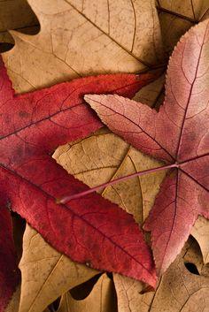 #Leaves #Fall #Autumn THYMEROSE loves! https://www.etsy.com/uk/shop/Thymerose