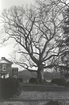 Oak Tree on the Pemberton Farm- might translate well