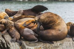 of-the-pacific-ocean-sea-lions-08