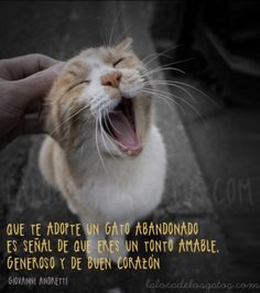 #Cats #CatFacts                                                                                                                                                                                 Más