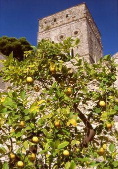 Lemon tree in the Villa Rufolo Greece Outfit, Villa, Italian Garden, Positano, Amalfi Coast, Naples, Olives, Italy Travel, Photo Book