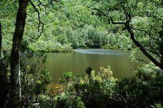Pablo Font: - Muniellos - el Bosque Encantado (Asturias)