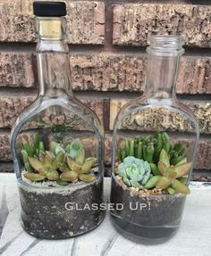 Glass bottles upcycled into planters. Lovely little succulents add the perfect t. Wine Bottle Planter, Bottle Terrarium, Bottle Garden, Liquor Bottle Crafts, Wine Bottle Art, Diy Bottle, Plants In Bottles, Glass Bottles, Liquor Bottles