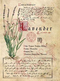 BOS ~ Lavender herb page