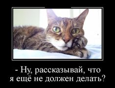 #юмор Демотиваторы вечерние.
