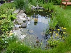 Wildlife pond – one year on…. – Shell'sDuck – My gallery - Modern Pond Landscaping, Ponds Backyard, Backyard Waterfalls, Koi Ponds, Outdoor Fish Ponds, Landscaping Design, Garden Pond Design, Garden Design Plans, Outdoor Water Features