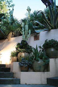 Potted desert plants