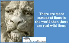 Animal Facts : Statues of lions | did you know