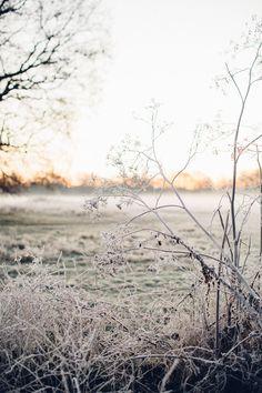 foggy winter scenes
