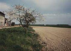Grandi valli veronesi con ciliegio 1989 - Il profilo delle nuvole