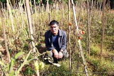 Gyanendra is a member of a self-help group in Nepal. He took a loan to start growing tomatoes which he hopes to sell. TLM is supporting both his children through school.  Case study   This really helped me!{This got me motivated.  This helped me take things to a new level.  This is awesome.  This business is awesome.  I'm glad I  am doing this.  This is the best