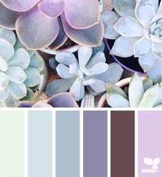 { succulent hues } image via: @daphnerosaflowers