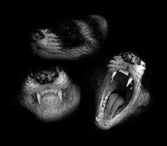 Ferrets byn