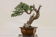 seni bonsai - Penelusuran Google