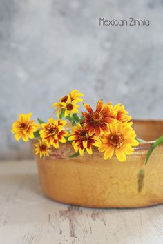 Mexican Zinnia|Enjoy the Little Things