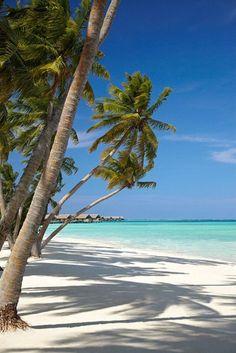 White sand beach at the Shangri-La`s Villingili Resort and Spa in Villingili Island, Maldives