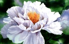Peony by Janet Whittle