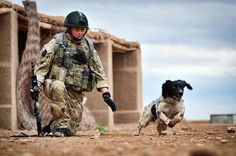 Hero hound honoured: Medal for Theo the sniffer dog who died of a 'broken heart' hours after his handler was killed    25 Oct 2012 19:30
