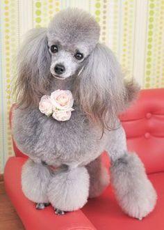 プリンセスレイラ --愛犬の友 ヘアスタイルカタログ--