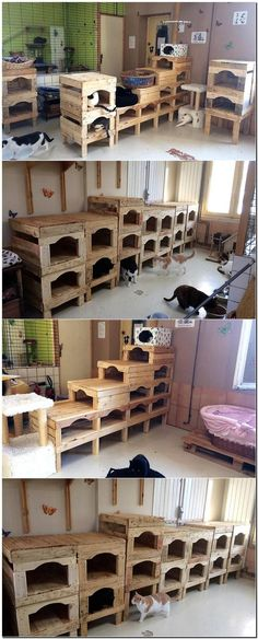 This idea of creating upcycled wood pallet beds and playhouse for the cats is useful for those who love cats and have many in their home. It can be copied by a person who runs an organization for the pets because it makes managing them easy by providing t Wood Pallet Beds, Wood Pallet Furniture, Cat Furniture, Wooden Pallets, Furniture Making, Furniture Ideas, Pallet Headboards, Pallet Benches, Pallet Couch