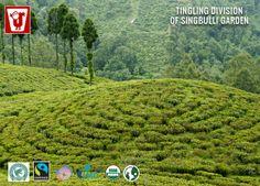 Jayshree Tea Tingling division