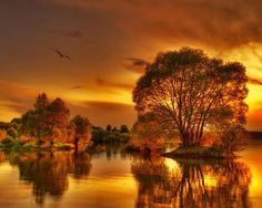 Beautiful fall sky at sunset. Gold Nature Wallpaper, Sunset Wallpaper, Painting Wallpaper, Painting Art, Beautiful Sunset, Beautiful World, Beautiful Places, Beautiful Pictures, Amazing Sunsets