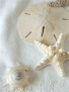 Sand Dollar, Starfish, & Shell on Sand.
