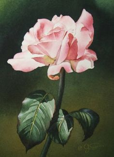 Soft Pink Rose III, painting by artist Jacqueline Gnott