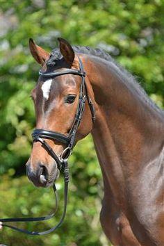 Paarden te koop: Farley Tarpania