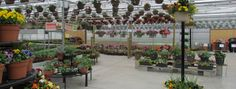 The retail is open for the season at Aspen Greenhouses. Countries Around The World, Around The Worlds, Hardy Perennials, Greenhouses, Hanging Baskets, Aspen, This Is Us, Planters, Sunday