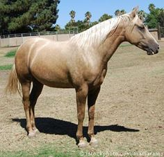 The perfect horse...my horse looked just like this one. Oh how she isMisSed..