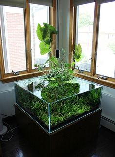 42 Astonishing Aquarium Design Ideas For Indoor Decorations - An aquarium is an enclosure with at least one clear side that houses water-dwelling fish, plants and other livestock and decorations. An aquarium offe. Planted Aquarium, Aquarium Terrarium, Nature Aquarium, Home Aquarium, Aquarium Fish Tank, Fish Tanks, Water Terrarium, Aquarium Design, Indoor Water Garden