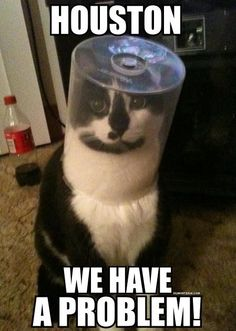It's a cat's duty to always look dignified! ; )