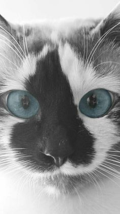 Love its markings and eye's